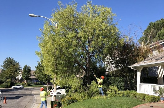 Tree Trimming Service Tree Trimming Company Tip Top Arborists