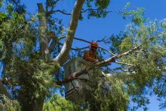 tree worker trimming