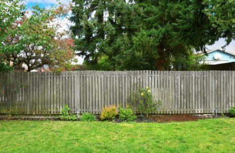neighbor tree backyard