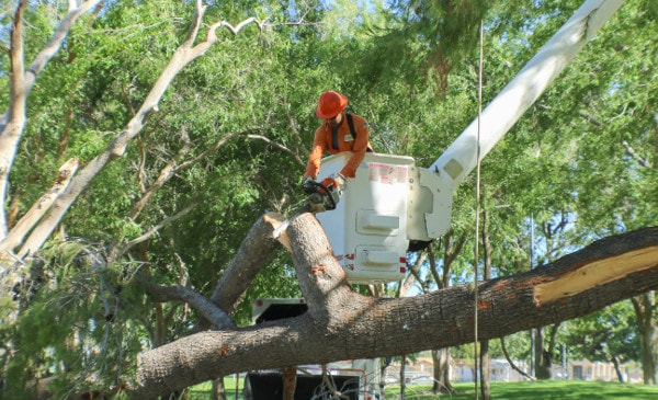 removing tree in antelope valley