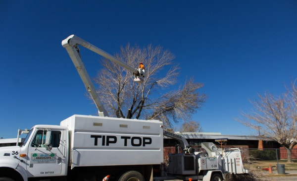 tree trimming in antelope valley