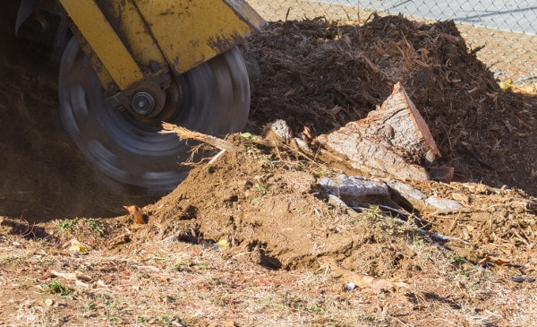 deep stump grinding in antelope valley
