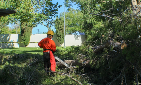 removing a fallen tree in santa clarita valley park