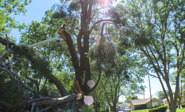 crew removing tree branch in a park in victor valley