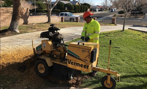 grinding down a tree stump in victor valley
