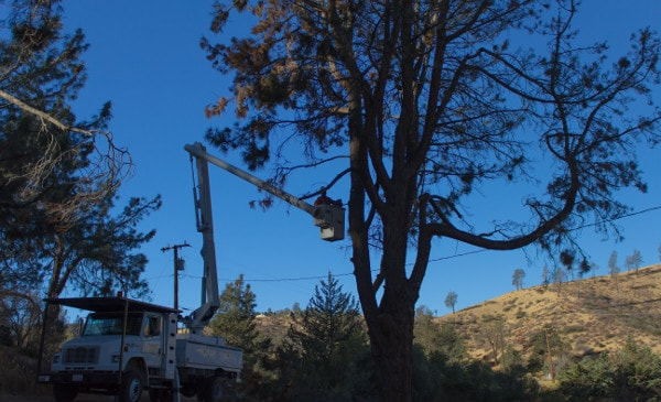 boom truck with climber trimming tree in victor valley
