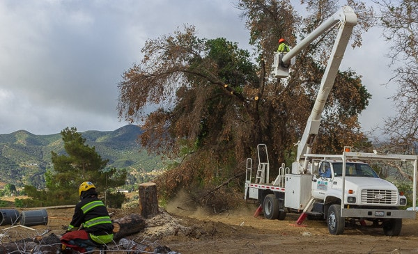 removing a dead tree in acton,ca