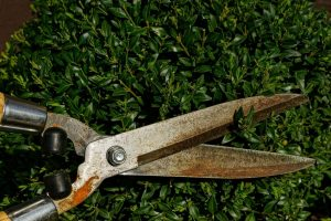 rusty hedge clippers