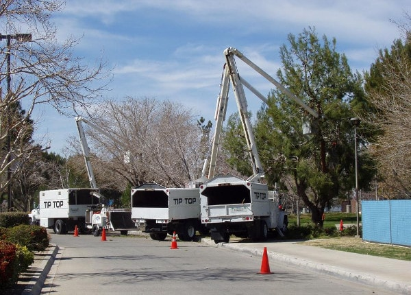 tree trimming in rosamond,ca