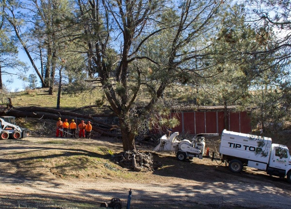 palmdale tree crew next to chipper
